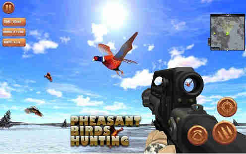 Pheasant Bird Hunting